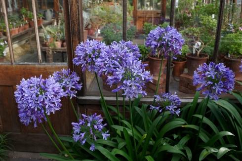 http://thelondonperspective.files.wordpress.com/2013/04/chelsea-physic-garden-2.jpg?resize=490%2C326